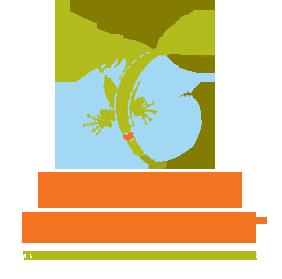 flyingiguana2